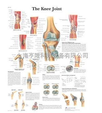 新The Knee Joint