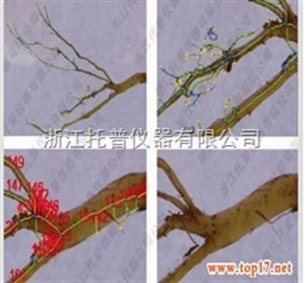 GXY-A根系分析仪研究银花根系为大规模种植提供依据