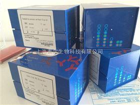 大鼠胰岛素Elisa试剂盒说明书