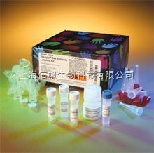 大鼠CD8分子(CD8) ELISA试剂盒