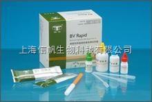 大鼠γ干扰素(IFN-γ) ELISA试剂盒