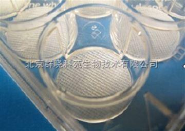 PS152096-24聚苯乙烯3D细胞培养支架(3D Insert-PS)--3D Biotek