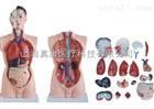 男性躯干模型(人体骨骼)
