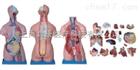 三性躯干模型(人体骨骼)