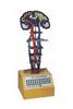 GD/A17207平衡觉传导电动模型