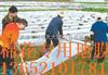 天津黑色地膜;天津农用地膜;天津地膜生产厂家