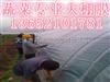 天津地膜厂家批发。天津除草地膜。天津保温地膜。