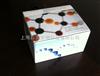 大鼠C-反应蛋白(CRP)ELISA试剂盒说明书