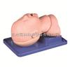 TK/10苏州同科婴儿气管插管模型